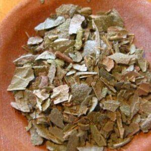 Blätter & Nadeln